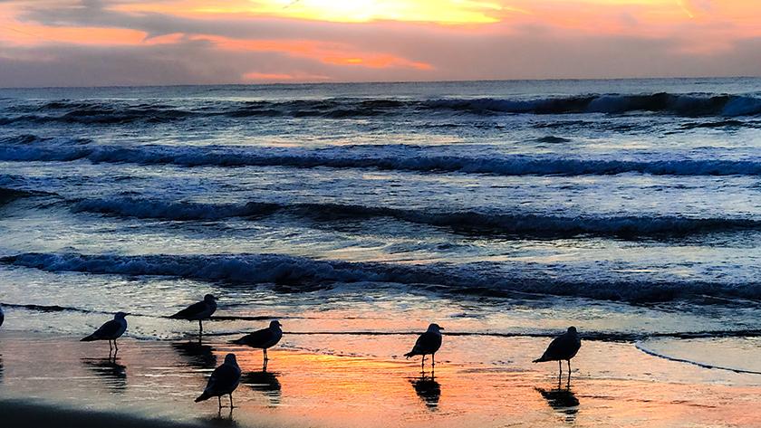千里浜なぎさドライブウェイの鳥たち