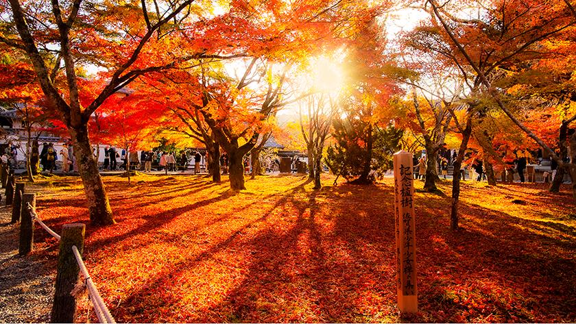 秋の京都のまとめ
