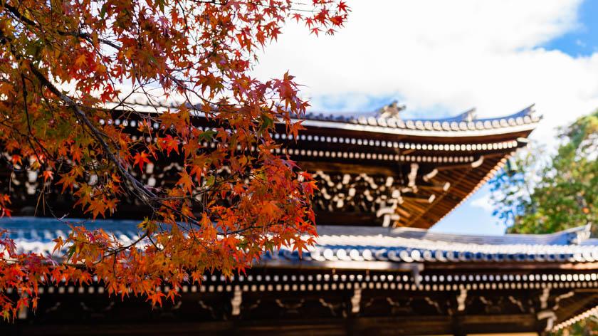 【車で行く】秋の京都【3選】
