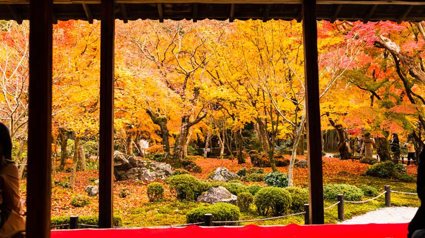 圓光寺の見どころ